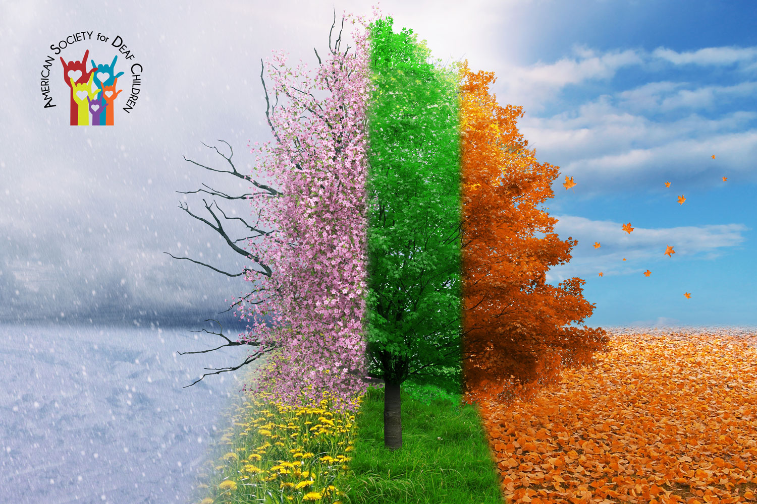 image shows a tree divided into four sections with each representing a different season
